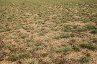 Végétalisation d'un sol minéral stabilisé
