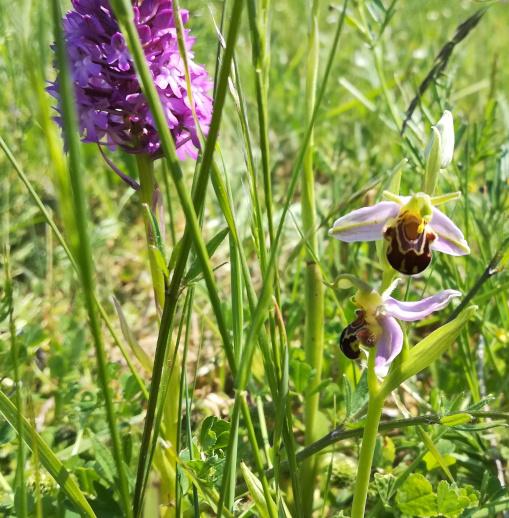 La gestion différenciée pour la biodiversité