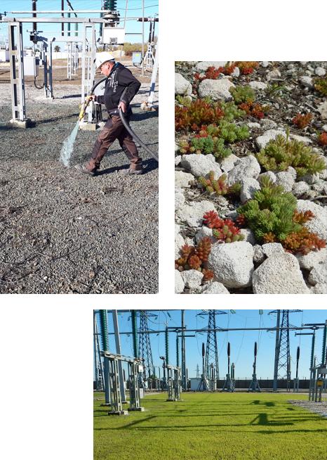 Végétalisation d'un poste de transformation éléectrique, sans aucun traitement chimique